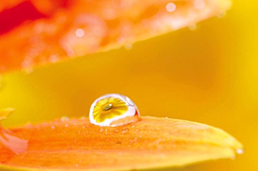Выдержка: F/8, 1/125 с, ISO100, WB: солнечный свет (эквивалент 93 мм в формате 35 мм)